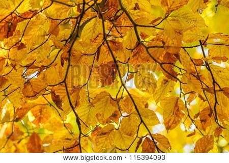 Yellow Leaves With Tiny Twig Over Sunlight. Background With Autumn Leaves , Photo Of Sunlight Throug
