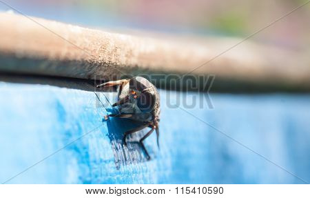 Fly / brake / horsefly - bloodsucker close