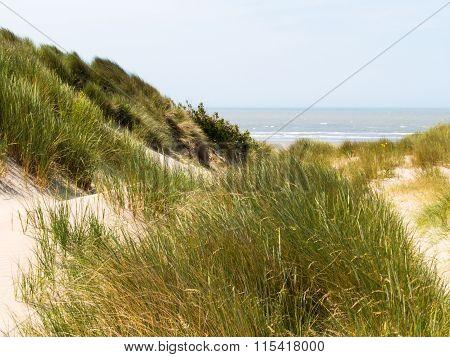 Sandy dunes of the North Sea Belgium