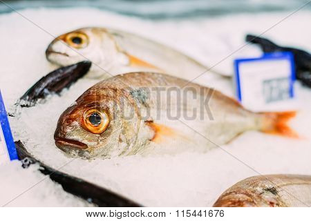 Fresh red fish on ice on market store shop.