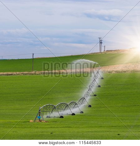 Irrigation sprinkler watering crops on fertile farm land, usa.