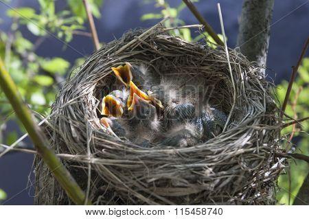 Little Children Birds 7
