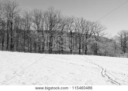 winter landscape in black and white