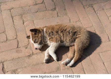 Homeless abandoned dog sleeping on the street