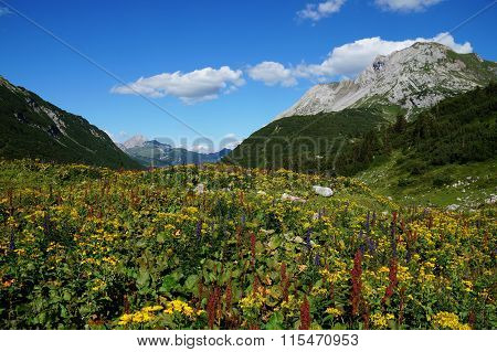 Mountain valley covered by an alpine wild flower meadow