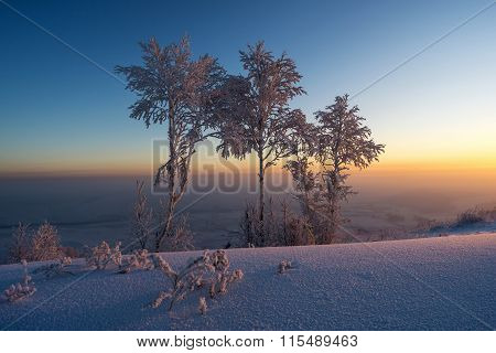 Trees In The Snow At Sunrise