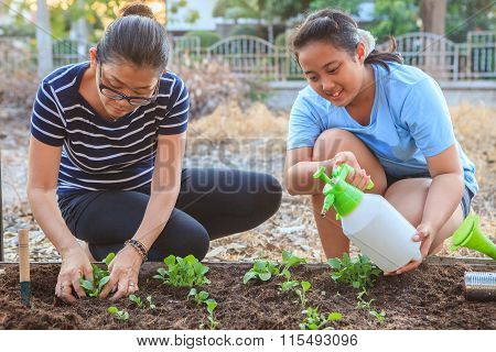Mother And Young Daughter Planting Vegetable In Home Garden Field Use For People Family And Single M
