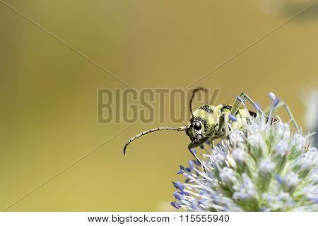 Yellow Black Bug Close-up.