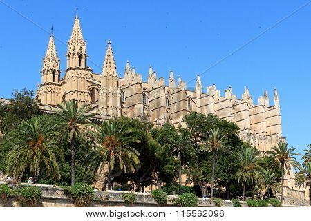 Church Palma Cathedral with palm trees in Majorca, Spain