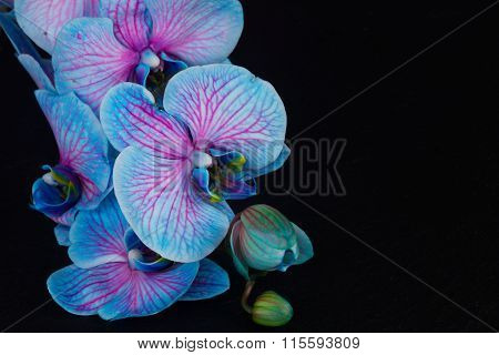 Bunch of violet orchids