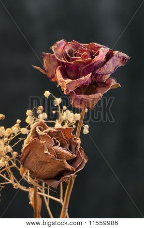 A Two Wilting Rose On Dark Background