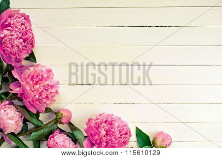 Pink peony flowers on vintage white background