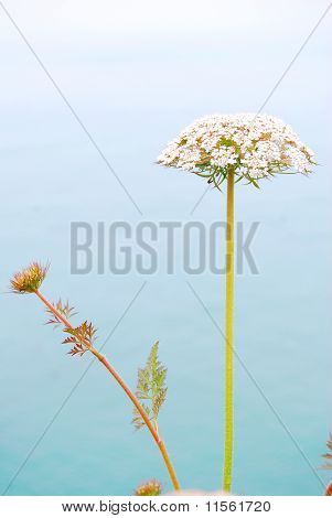 Flower and sea