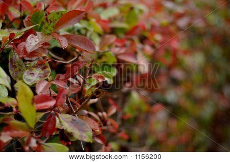 Autumn Hedge Leaves