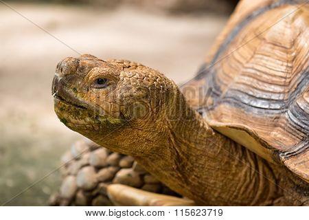 Turtle Head.