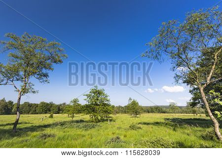 Some trees in wide green bog landscape in the High Fens Eifel Belgium with blue sky. poster