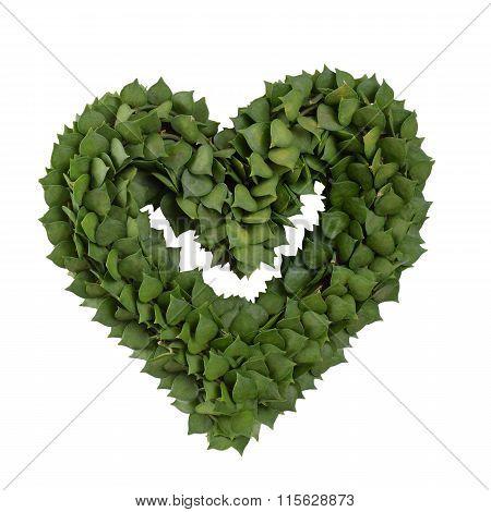Plant In Heart     Shape.