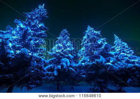 Snow covered Christmas tree lights in a winter wonderland forest by night.