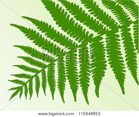 Vector - Single fern frond