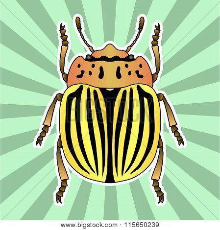 Insect anatomy. Sticker  colorado potato beetle. Leptinotarsa decemlineata. Sketch of colorado potat