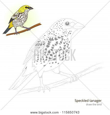 Speckled tanager learn birds educational game learn to draw vector illustration poster