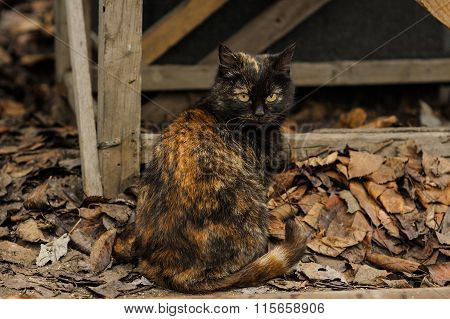 Tortoiseshell Torty Fluffy Cat Sitting On The Street