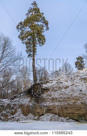 Pine Tree Over Frozen River
