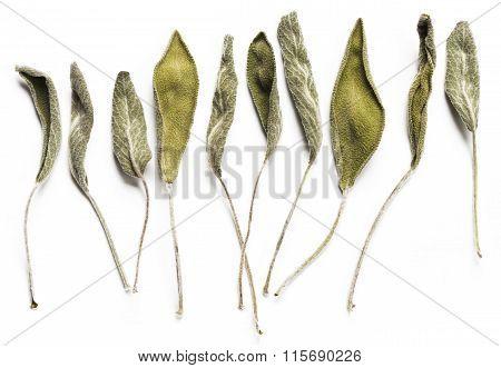 Dry Sage Leaves (salvia)