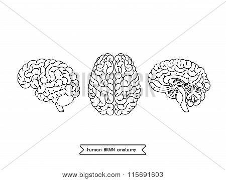 Human Brain Views