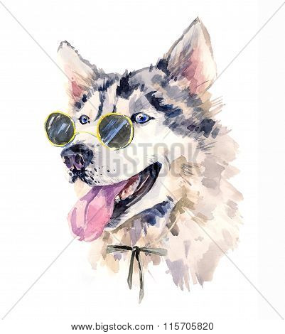 Handsome watercolor husky in bow-tie and dark sun glasses