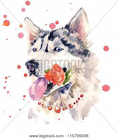 Coquettish siberian sheepdog with a rose in the mouth.