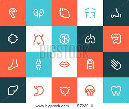 Human anatomy icons. Flat style