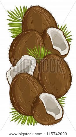 Coconut Isolated, Coconut Vector. Composition of Coconut on white background. Coconut icon, Nuts set, Coconuts with Leaf. Nuts Composition for Packaging. Half Coconut.