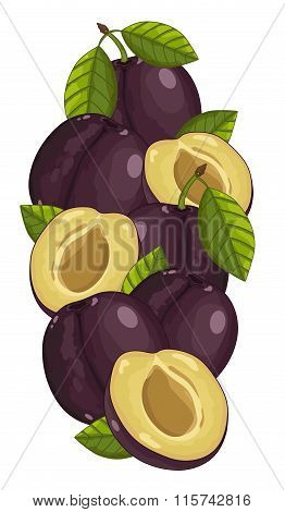 Plum isolated, Vector, composition.