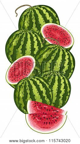 Watermelon isolated, Vector, composition.