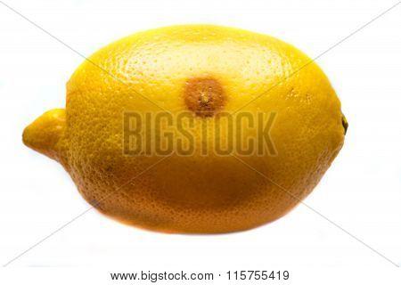 One Moldy Lemon