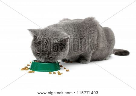 Gray Cat Eating Food From A Bowl