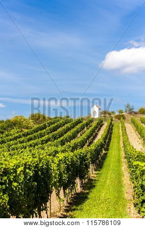 wayside near Hnanice with vineyard, Southern Moravia, Czech Republic