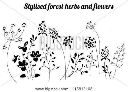 Floral template with stylized herbs and plants.  Black and white silhouette. Pattern for your design, romantic greeting cards, announcements, posters.
