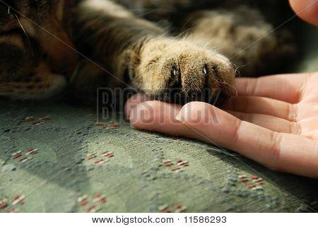 Cat Paw On Human Hand