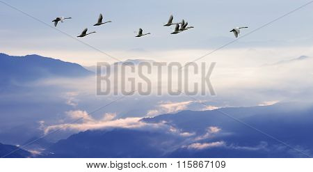 Flock Of Birds Flying Above The Mountains