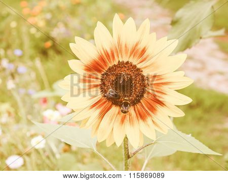 Retro Looking Sunflower Flower