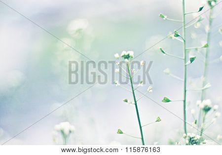Tender blue soft nature background