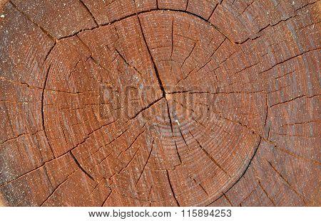 Cut Of Cork Tree