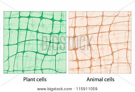 Background Plant Cells And Animal Cells