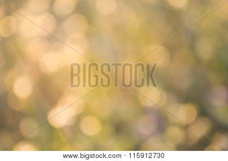 brown bokeh background