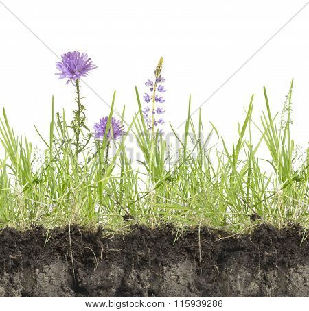 Green Grass With Flowers