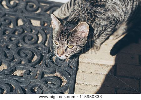 Alert Young Tabby Cat On Doormat. High Angle View.