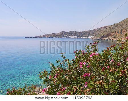 Oleander Fnd Blue Sea