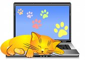 ginger cat asleep on the keyboard open silver laptop on a white background poster